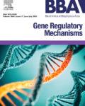 BBA – Gene Regulatory Mechanisms