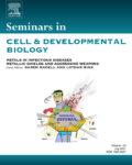 Seminars in Cell and Developmental Biology